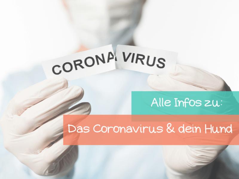 Ist das Coronavirus gefährlich für meinen Hund