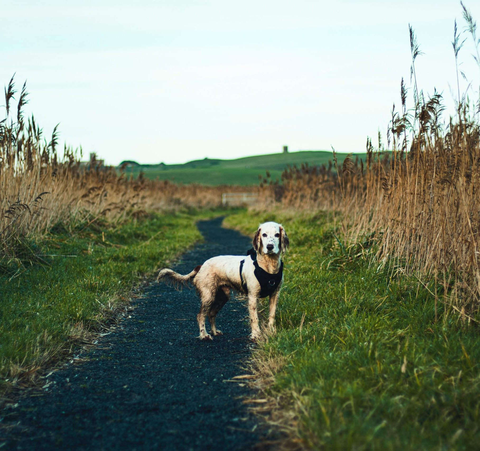 Kundenstimmen-vet-dogs