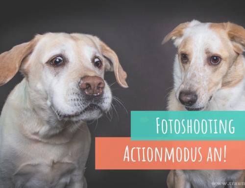 Fotoshooting in Lohmar – Komische Grimassen und ungewollte Komik – Hunde beim Leckerli fangen