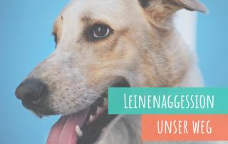 Leinenaggression-so-greift-dein-hund-keine-anderen-hunde-mehr-an