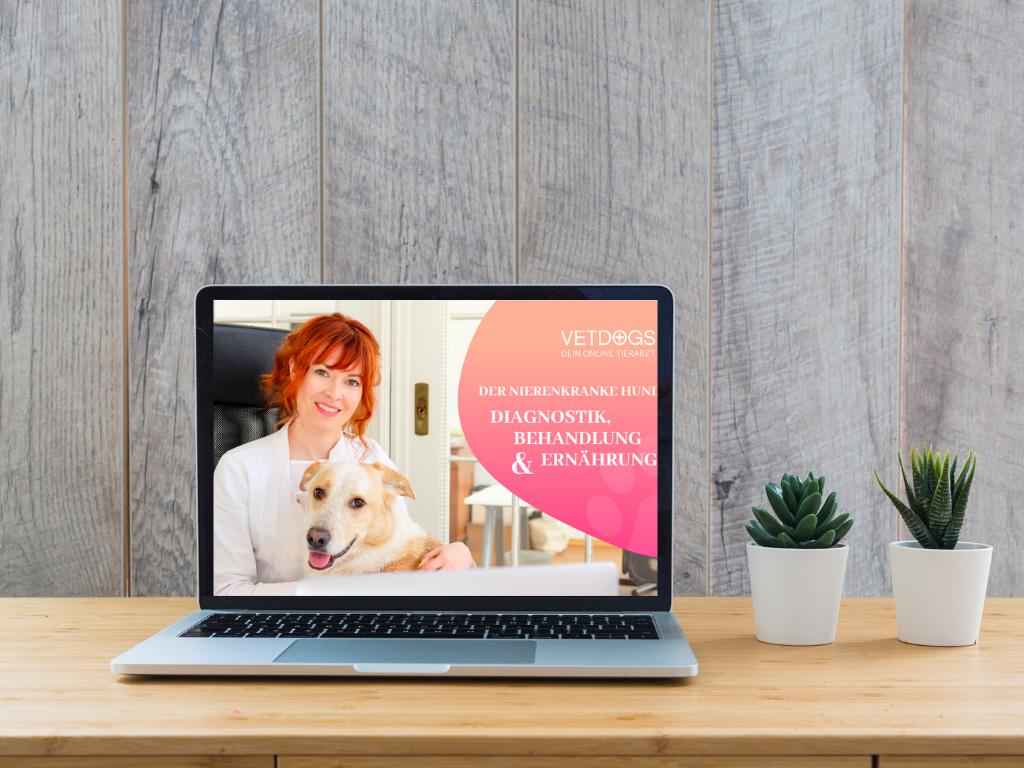 Niereninsuffizienz-beim-Hund-Webinar-Tierarzt