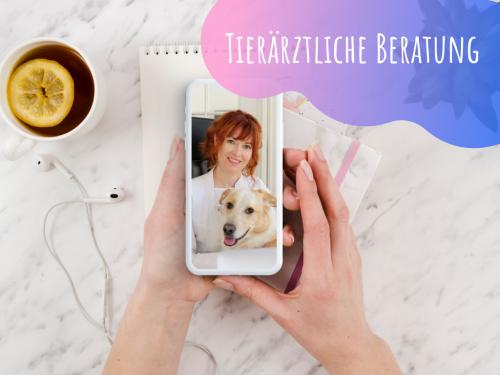 Tierärztliche-Online-Beratung-Online-Tierarzt-Vet-Dogs