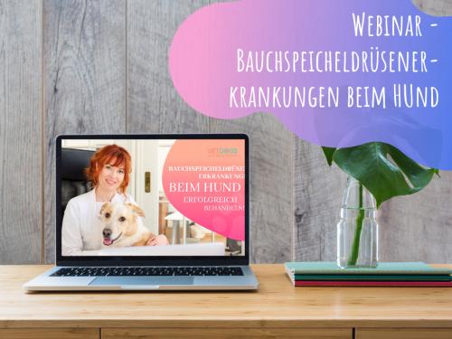 Webinar-Bauchspeicheldrüsenerkrankungen-beim-Hund