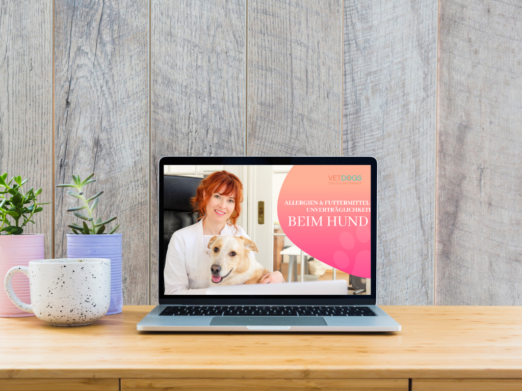 Webinar-Tierarzt-Allergien-beim-Hund
