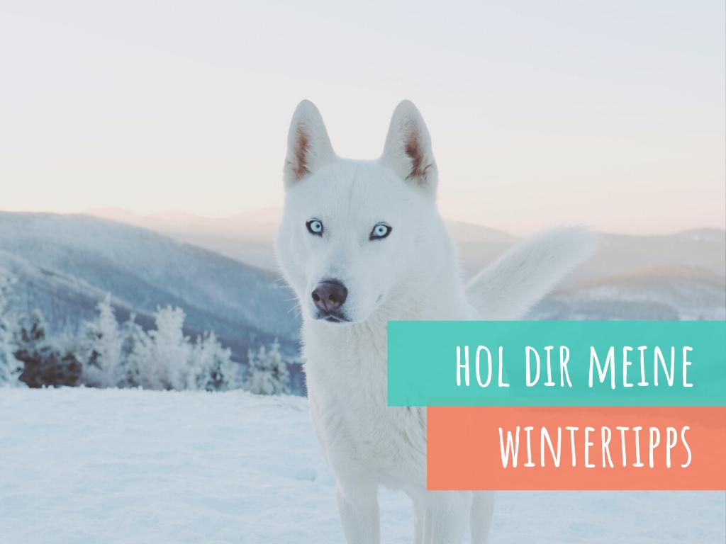Wintertipps-für-den-hund