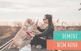 demenz-beim-hund