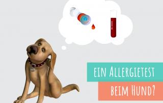 der-allergietest-beim-hund