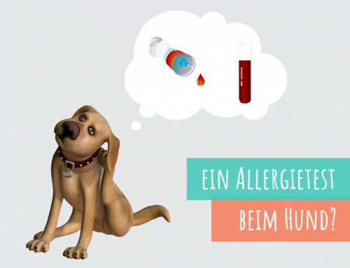 Warum ein Allergietest oftmals keinen Sinn macht