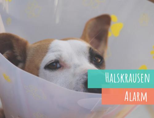 Halskrause/ Leckschutz beim kranken Hund und Alternativen dazu