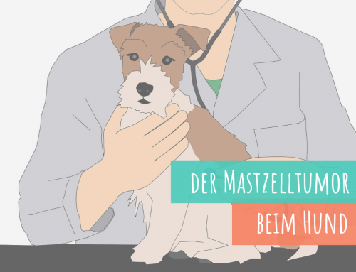 Der Mastzelltumor beim Hund – So hilfst du deinem Hund