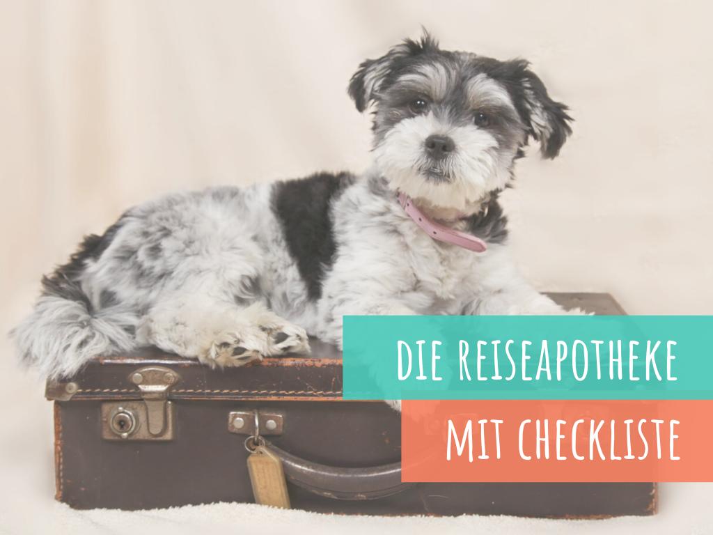 die-reiseapotheke-für-den-hund-inklusive-checkliste