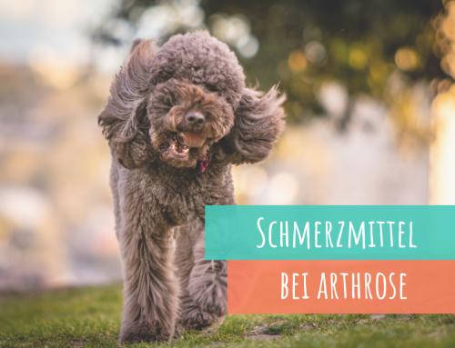 Diese Schmerzmittel helfen Deinem Hund bei Arthrose oder Gelenkproblemen