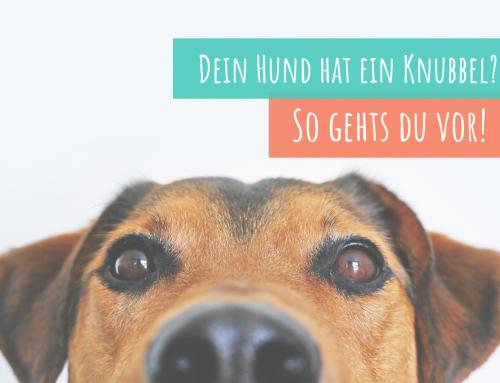 Dein Hund hat einen Knubbel, einen Knoten? – Alles über Hauttumore erfährst du hier!