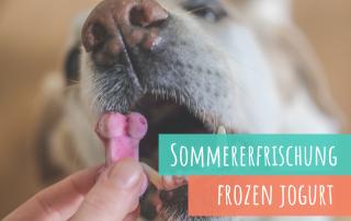 hundeeis-frozen-jogurt-für-den-hund
