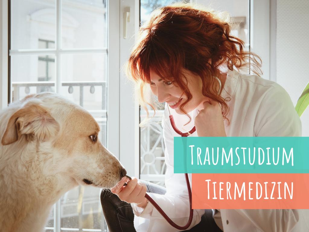 so-klappt-es-mit-dem-Studium-tiermedizin-veterinärmedizin