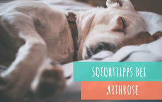 soforttipps-bei-arthrose