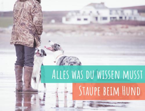 Q&A: Staupe beim Hund – Das musst Du als Hundebesitzer wissen