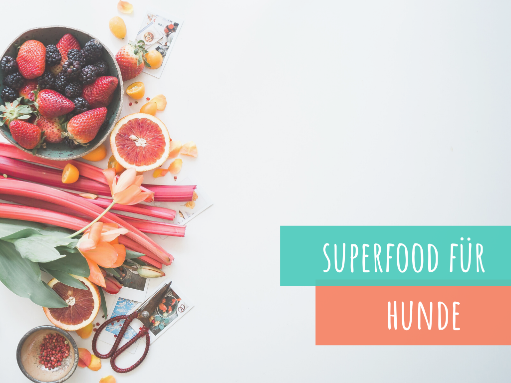 superfood-für-hunde