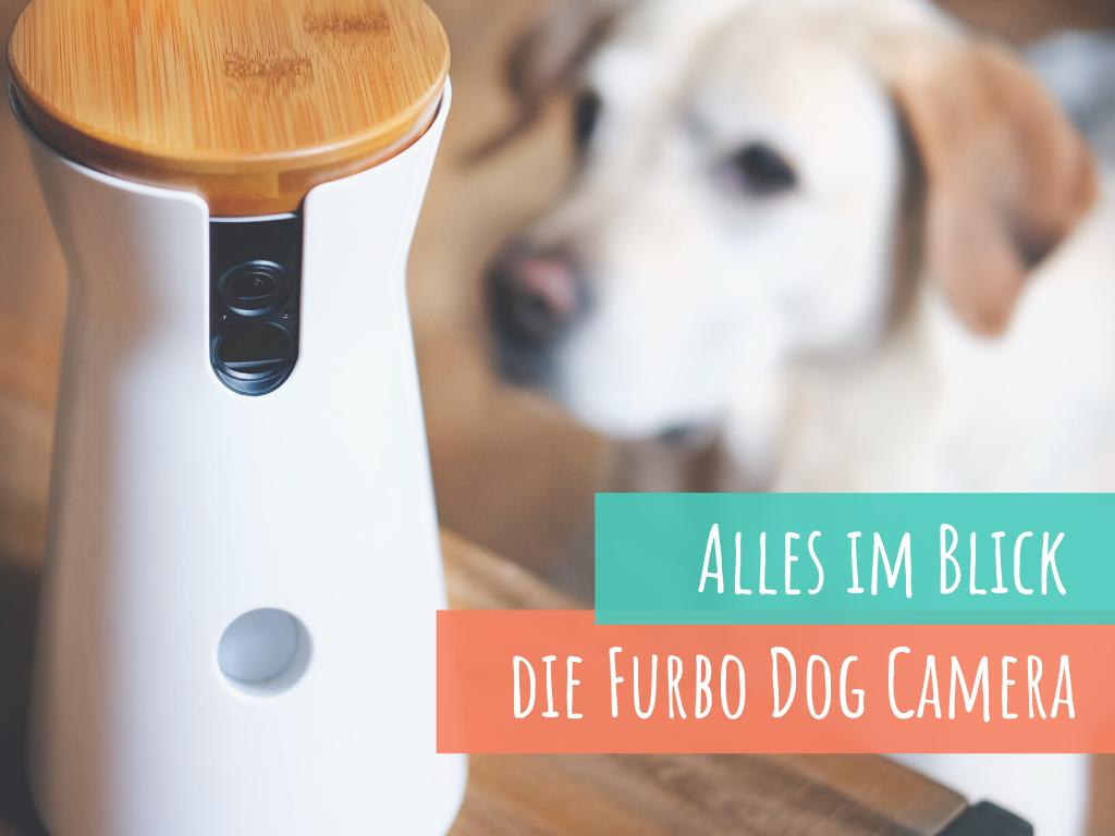 wir-testen-die-furbo-dog-camera