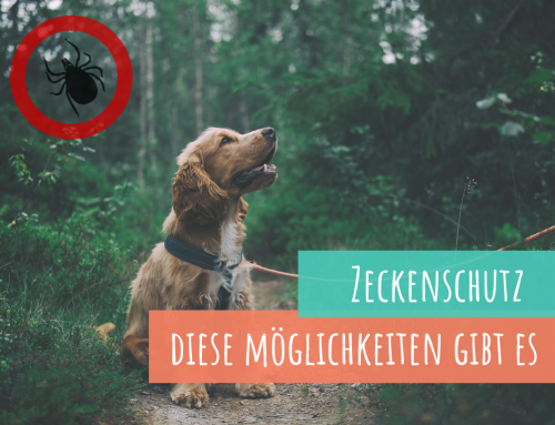 Zeckenschutz – Welche Möglichkeiten gibt es für deinen Hund