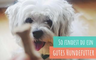 Inhaltsstoffe-im-Trockenfutter-richtig-lesen-ein-gutes-Hundefutter-finden