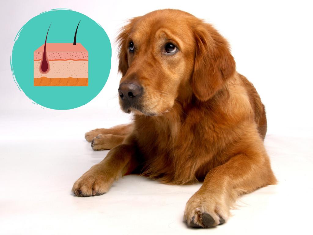 Webinar Allergien und Futtermittelunverträglichkeiten beim Hund