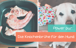 Knochenbrühe-für-den-Hund-Rezept