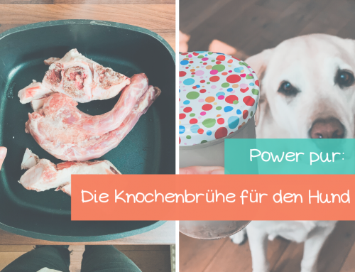 Knochenbrühe selbst gemacht – Der Powerdrink für deinen Hund