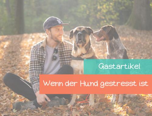 Gastartikel: Gestresste Vierbeiner – Wie Stress den Alltag unseres Hundes beeinflusst & wie wir richtig damit umgehen