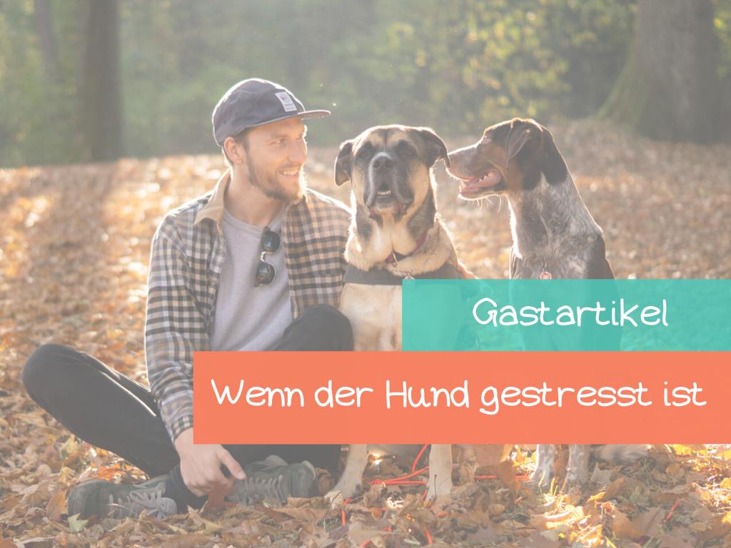 So-hilfst-du-deinem-Hund-beim-stress